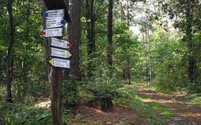Puszcza Kampinoska – cud przyrody obok nas.